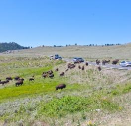 Yellowstone_2016_147