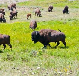 Yellowstone_2016_159
