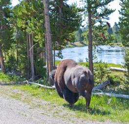 Yellowstone_2016_37